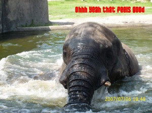 The elephant in the bath tub
